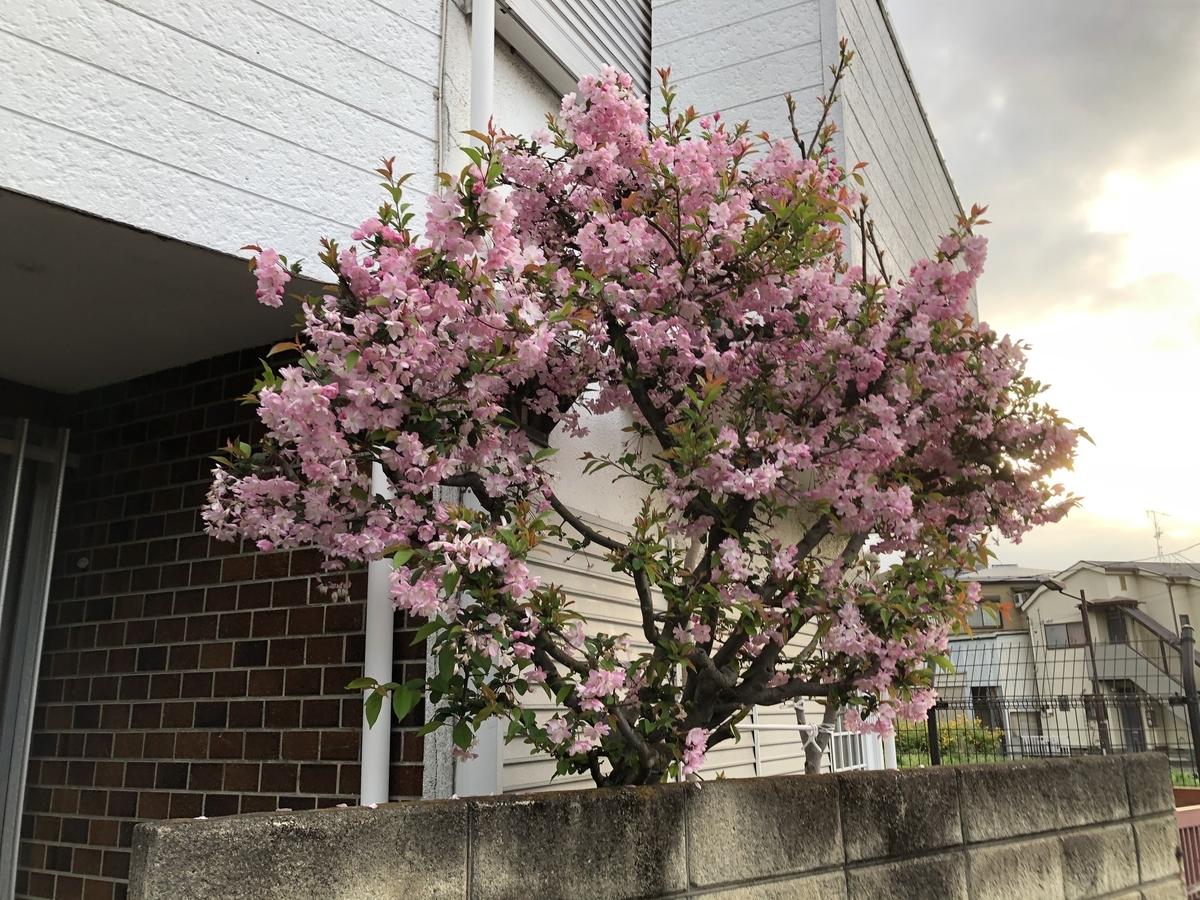 f:id:hideki-sansho:20210405223131j:plain