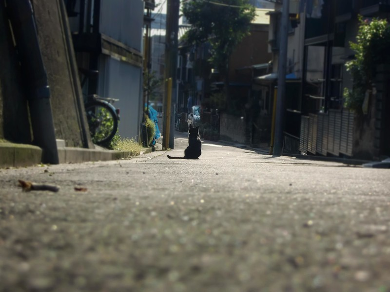 f:id:hiderino-akihito:20190323200217j:plain