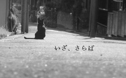 f:id:hiderino-akihito:20190714221622j:plain