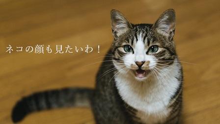 f:id:hiderino-akihito:20191207210809j:plain