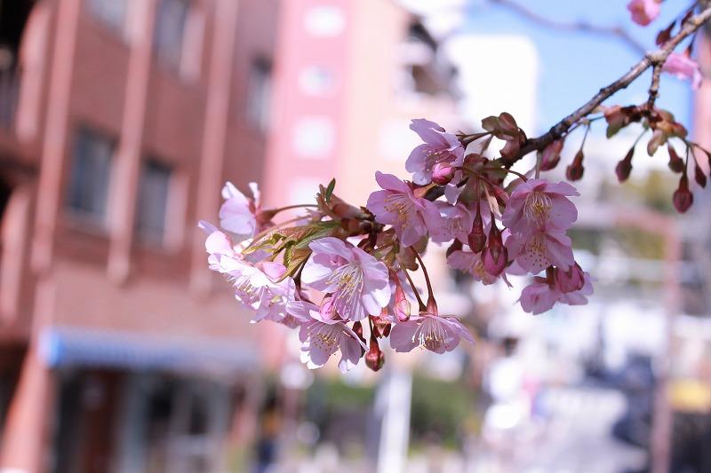 f:id:hideyoshi1537:20170213135050j:plain