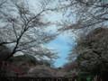 配藍天超美的!