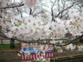 新河岸川桜まつり