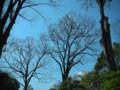六義園的樹…