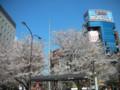 公車站的櫻花