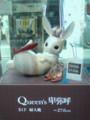 卑弥呼のウサギ