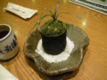 可愛的小盆栽