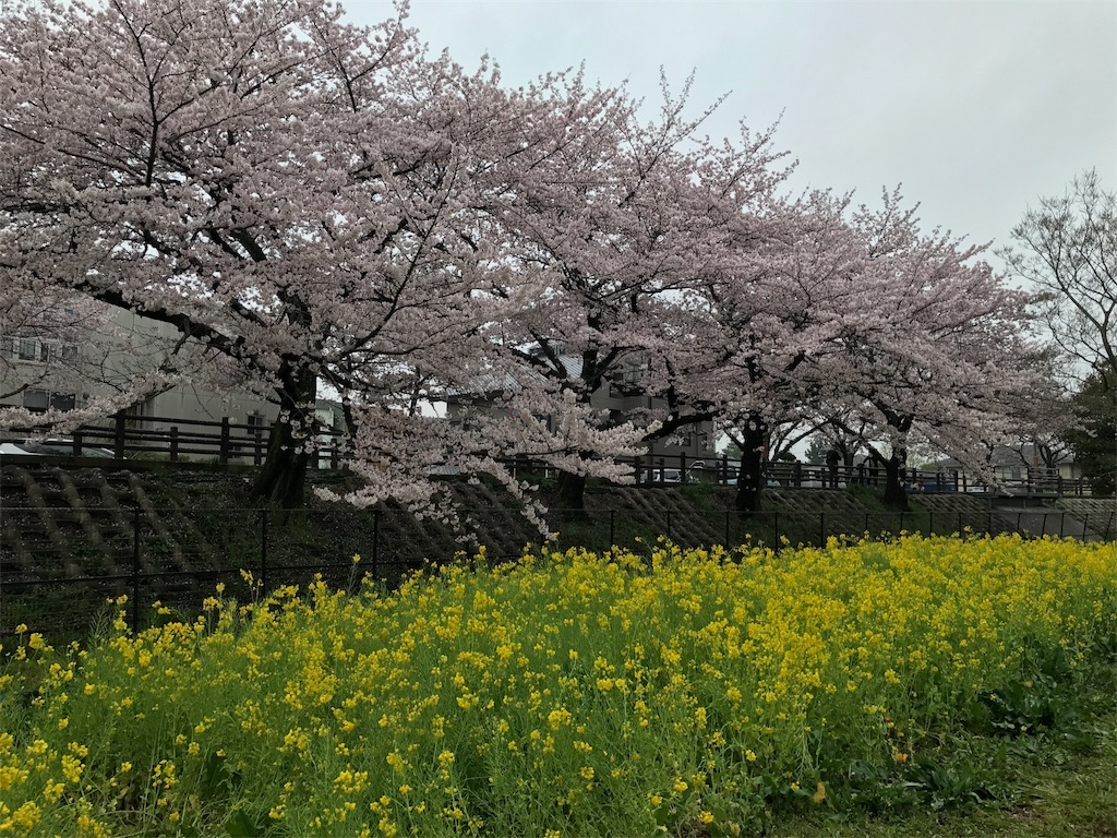 f:id:higashikanamachi_beavers:20170408185023j:image