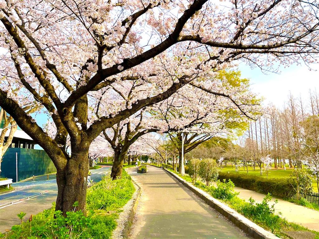 f:id:higashikanamachi_beavers:20210328181640j:image
