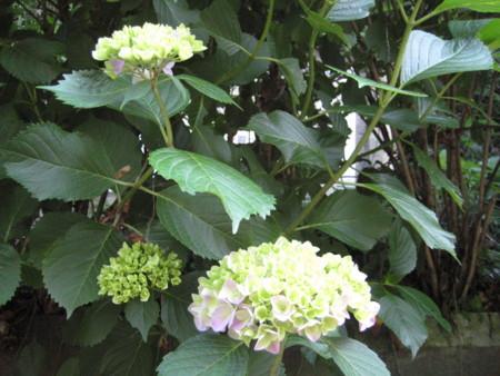 f:id:higashinaoko:20120604130901j:image