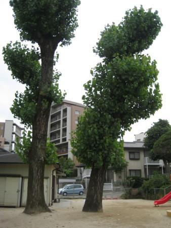 f:id:higashinaoko:20120608135843j:image