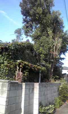 f:id:higasi-kurumeda:20120607164213j:image