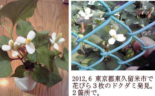 f:id:higasi-kurumeda:20120622090255j:image