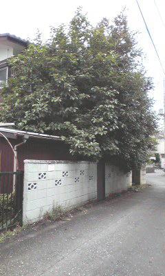 f:id:higasi-kurumeda:20120622092024j:image