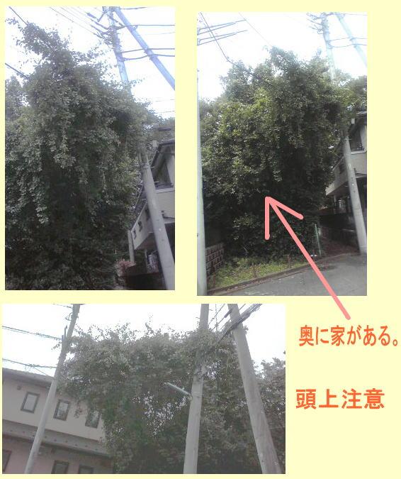 f:id:higasi-kurumeda:20120627150352j:image
