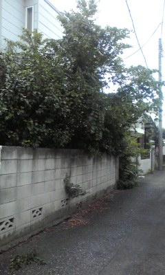f:id:higasi-kurumeda:20120712142733j:image