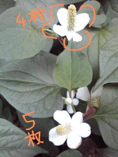 f:id:higasi-kurumeda:20130606171414j:image