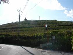ぶどうの丘