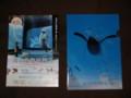 [旭山動物園物語][パンフレット][クリアファイル][グッズ][映画][ペンギン] 旭山動物園物語グッズ