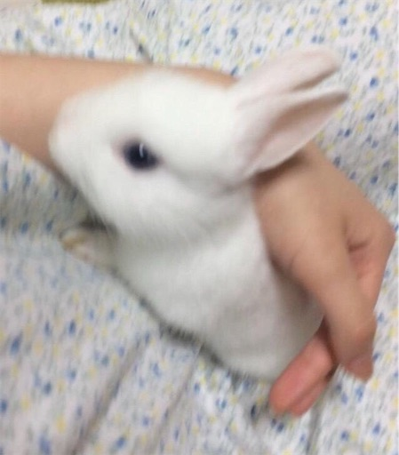 f:id:higekoioyaji:20190927191525j:image