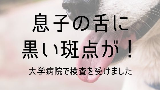f:id:higeshige:20191031012646j:plain