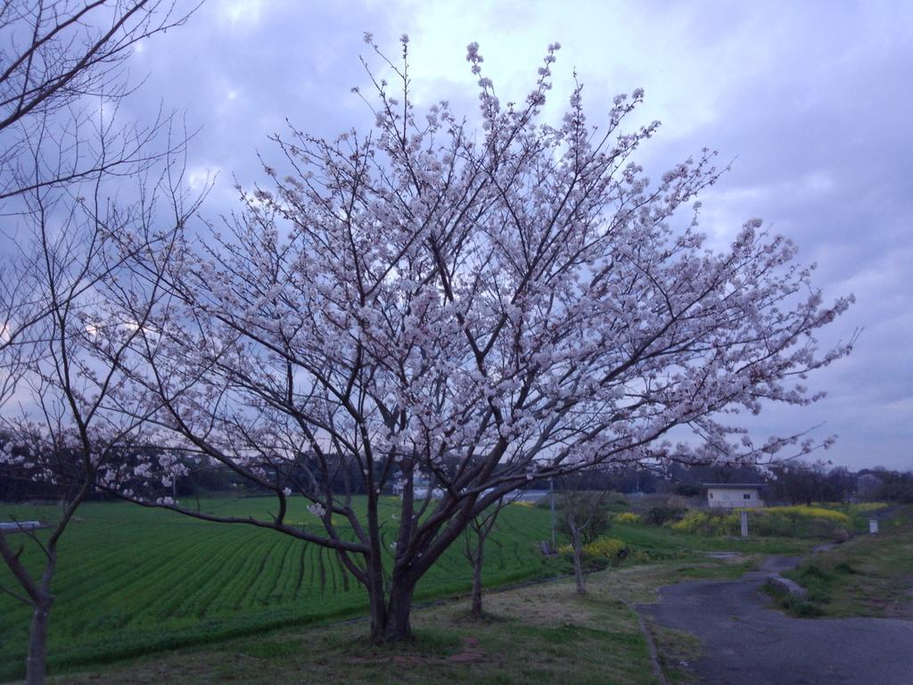 f:id:highball_koyuki:20181203222431j:plain