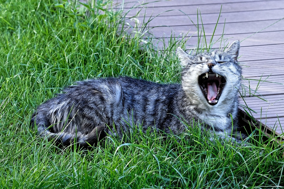 哺乳類、爬虫類、両生類、鳥類、魚類もあくびをする