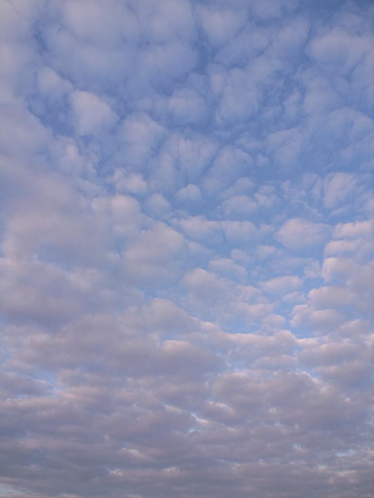 冬のウロコ雲