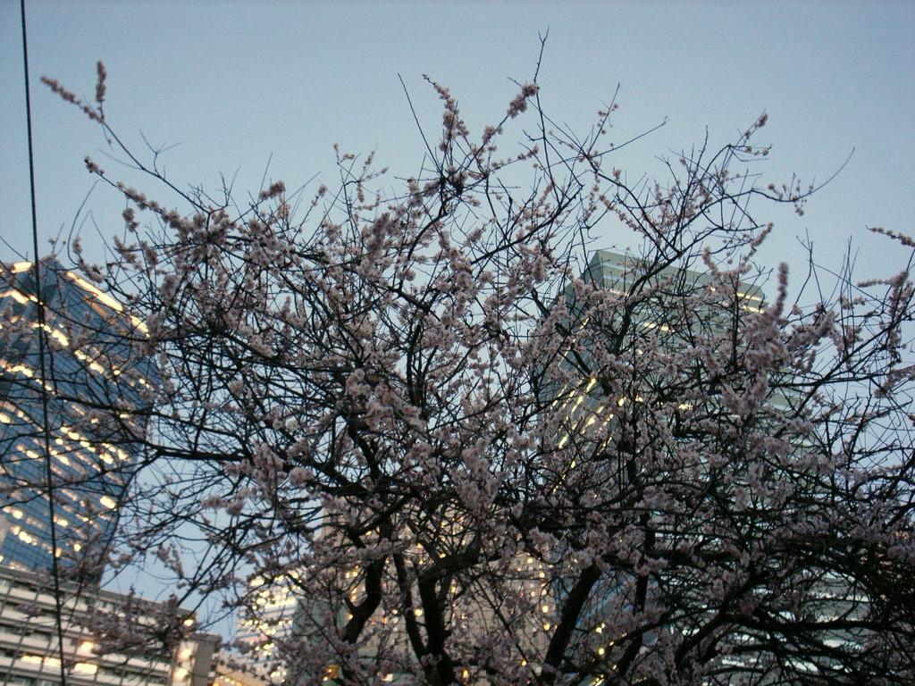 淀橋町2007「フラットライン」その3~夜梅