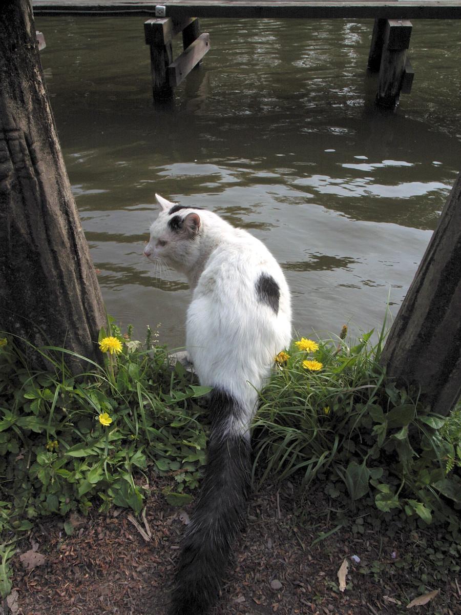 善福寺公園の水飲みねこ01