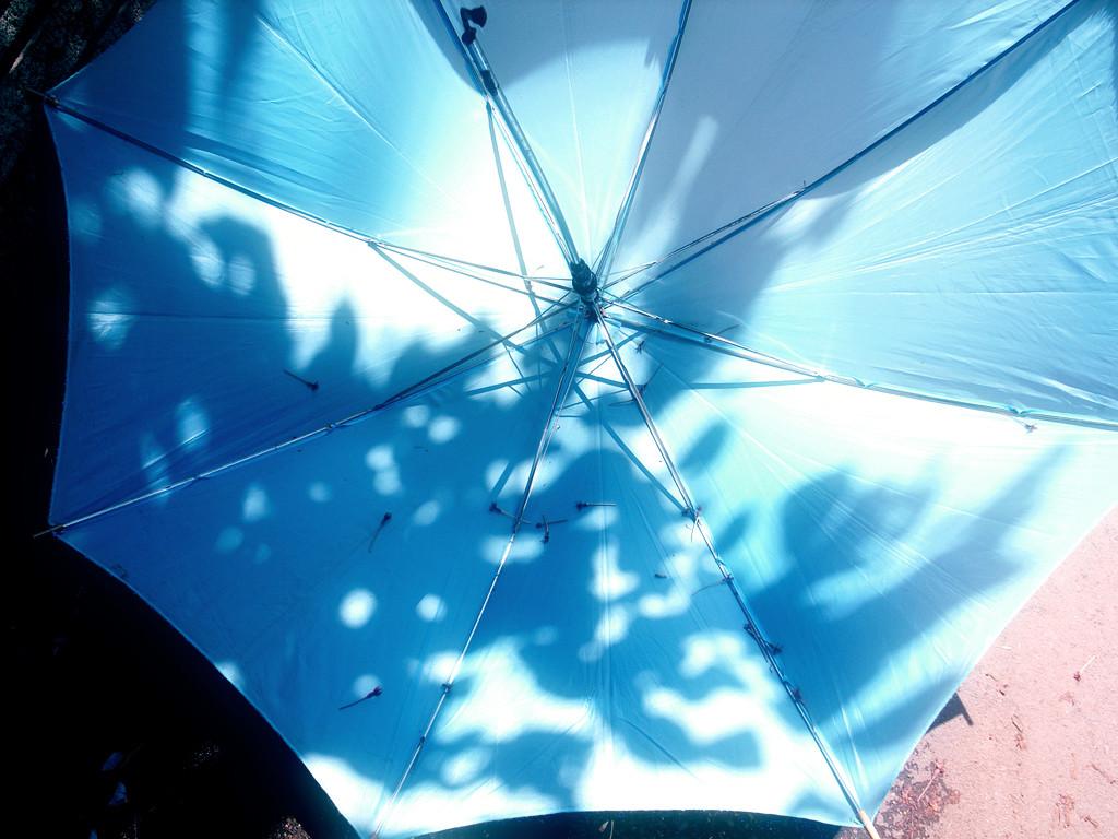 晴れの日の傘。