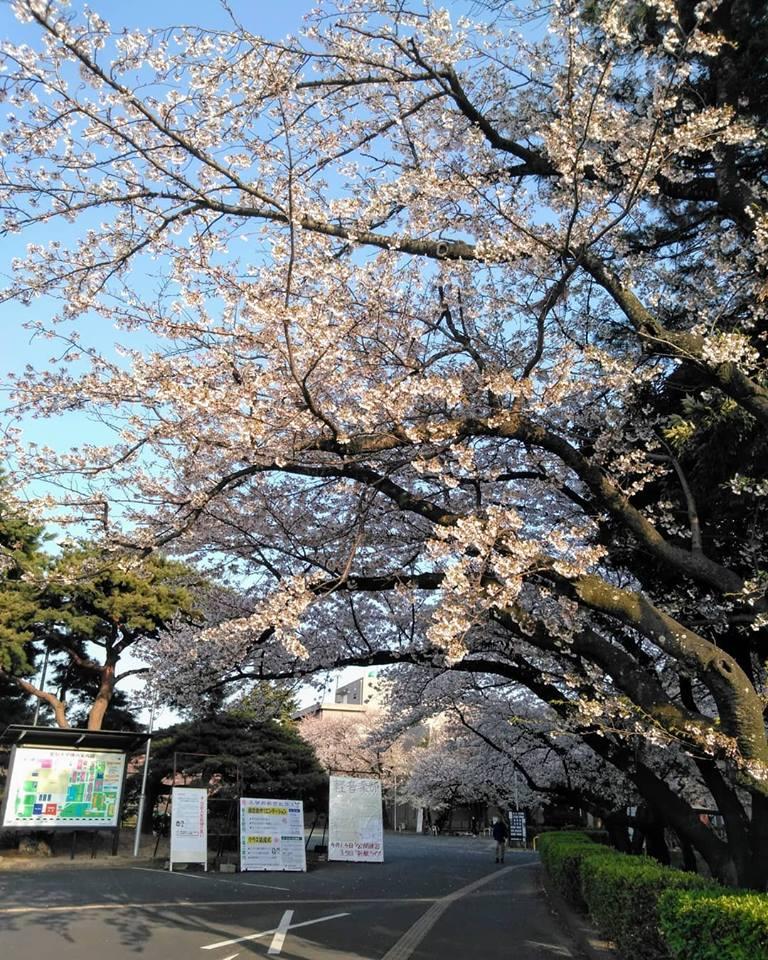 f:id:hihararara:20190406222301j:plain