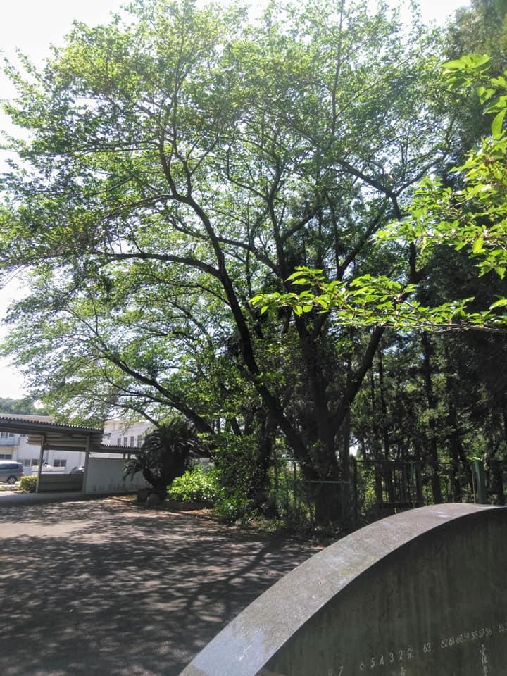 f:id:hihararara:20190505215701j:plain