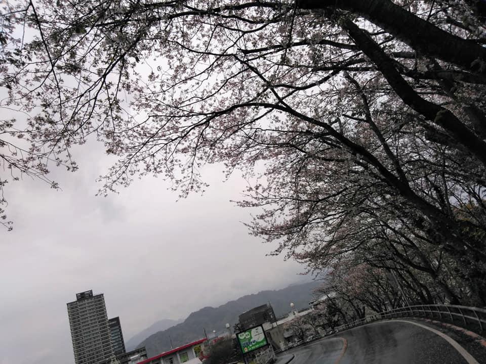 f:id:hihararara:20200415204846j:plain