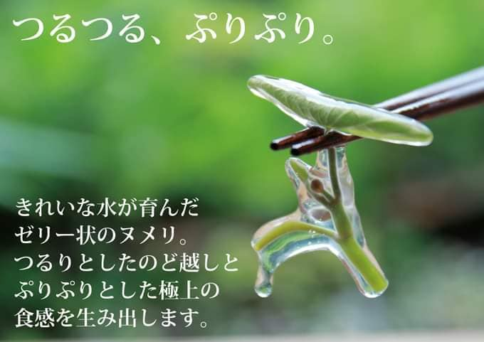 f:id:hihararara:20200516155145j:plain