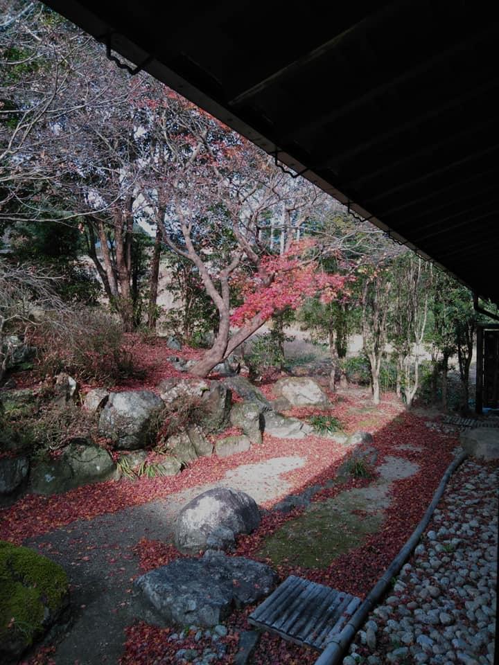 f:id:hihararara:20201226103404j:plain