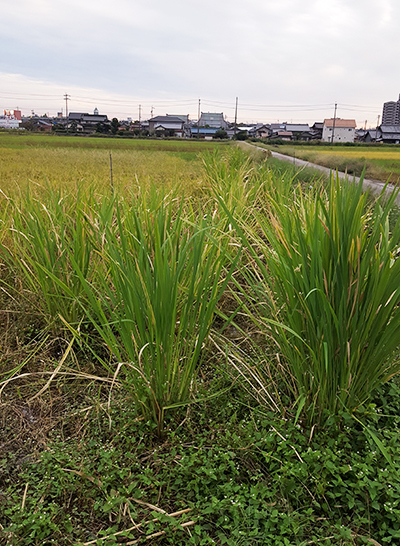f:id:hihumiyoi:20161011200430j:plain
