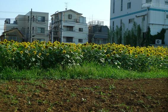 f:id:hikada:20090722162010j:image