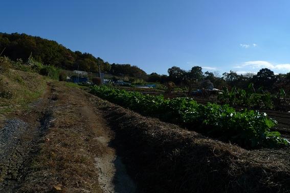 f:id:hikada:20121118140654j:image
