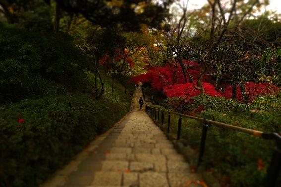 f:id:hikada:20121202135945j:image