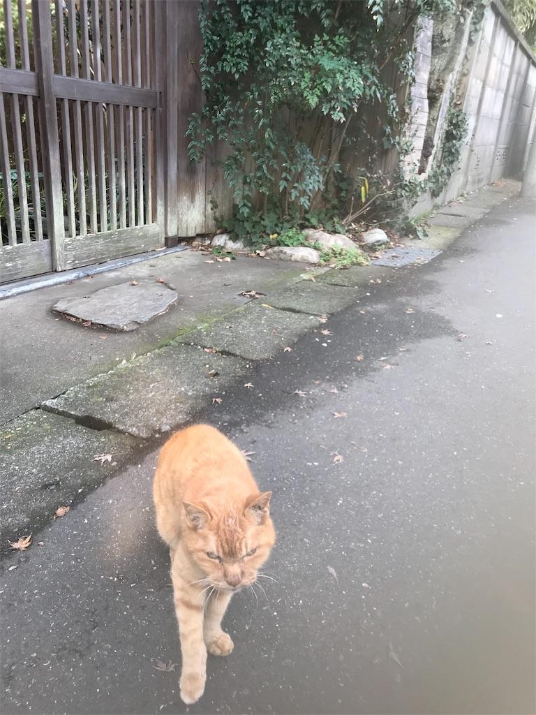 f:id:hikahika-m21:20181211104148j:image