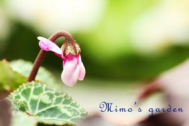 f:id:hikari-mimo:20161016165337j:plain