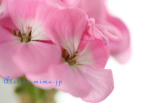f:id:hikari-mimo:20170126164046p:plain