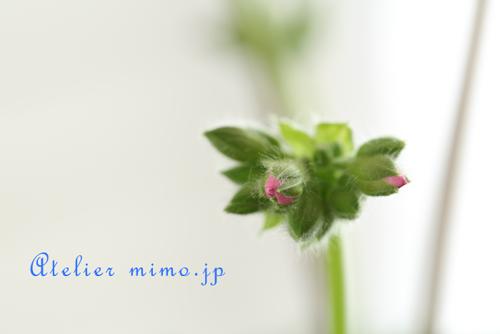 f:id:hikari-mimo:20170126165637p:plain