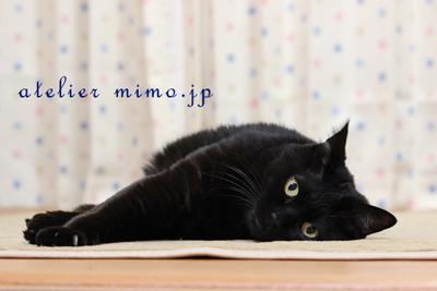 f:id:hikari-mimo:20170201204824j:plain