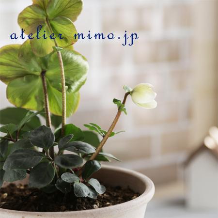 f:id:hikari-mimo:20170203195543j:plain