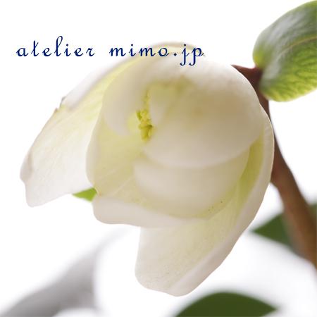 f:id:hikari-mimo:20170203200217j:plain