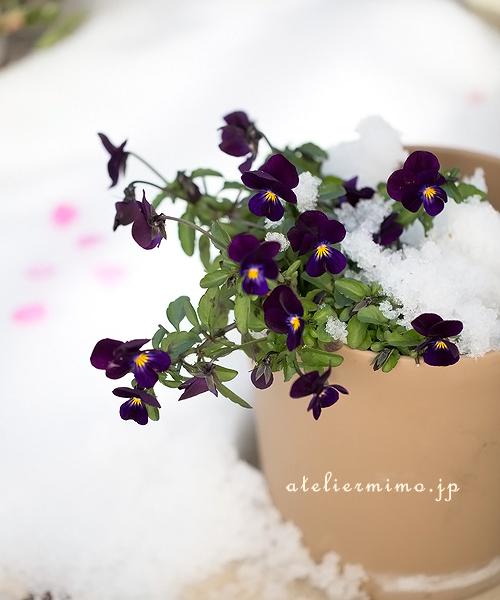f:id:hikari-mimo:20180126155930j:plain
