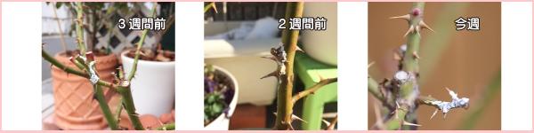 f:id:hikari-mimo:20180207171722j:plain