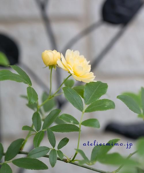 f:id:hikari-mimo:20180417171250j:plain